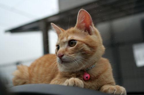 「ネコを撮る」_d0355333_16381126.jpg