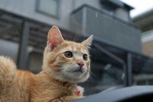 「ネコを撮る」_d0355333_16381134.jpg