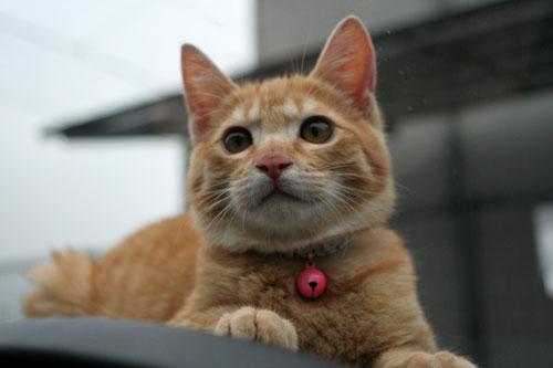 「ネコを撮る」_d0355333_16381176.jpg