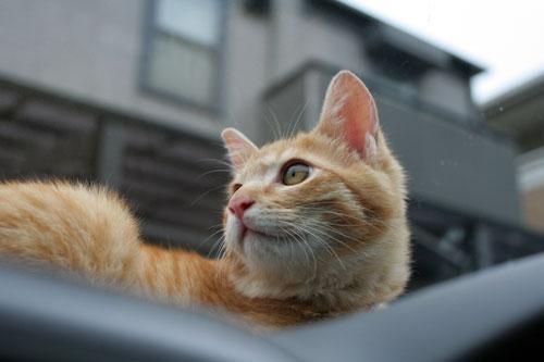 「ネコを撮る」_d0355333_16381236.jpg