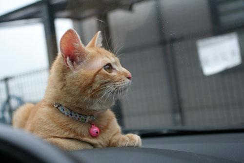 「ネコを撮る」_d0355333_16381328.jpg