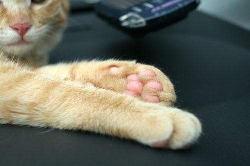 「ネコを撮る」_d0355333_16381579.jpg
