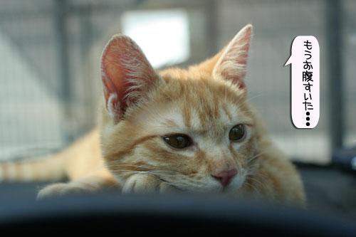 「ネコを撮る」_d0355333_16381614.jpg
