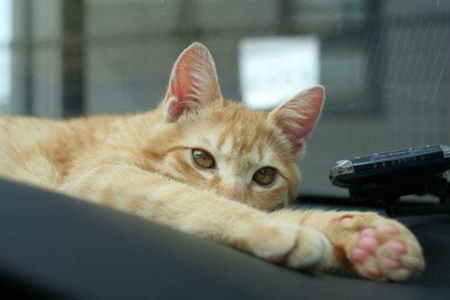 「ネコを撮る」_d0355333_16381678.jpg