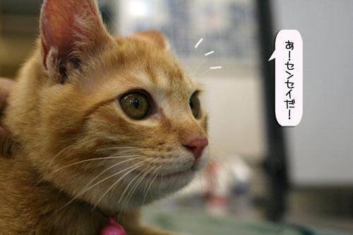 「ネコを撮る」_d0355333_16381728.jpg