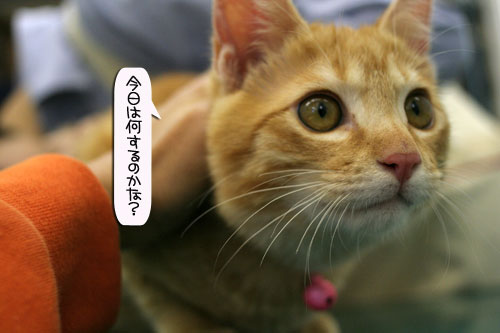 「ネコを撮る」_d0355333_16381762.jpg
