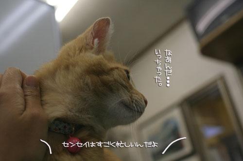 「ネコを撮る」_d0355333_16381828.jpg