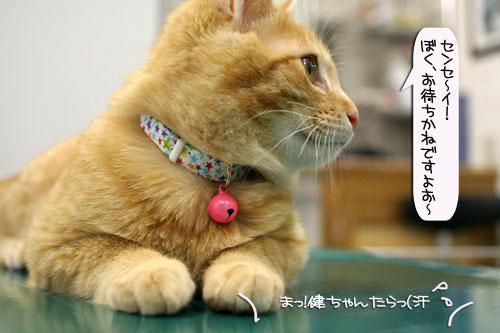 「ネコを撮る」_d0355333_16381927.jpg