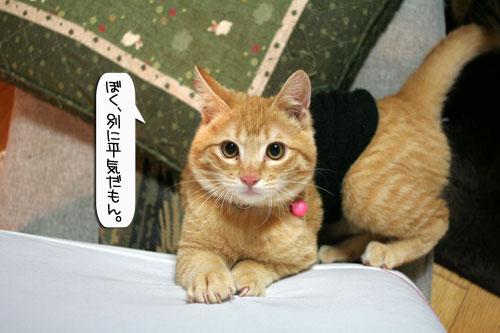 ネコ服と暖かい過し方_d0355333_16381954.jpg