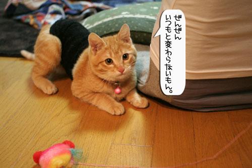 ネコ服と暖かい過し方_d0355333_16382004.jpg