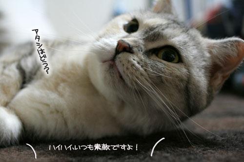 ネコ服と暖かい過し方_d0355333_16382170.jpg