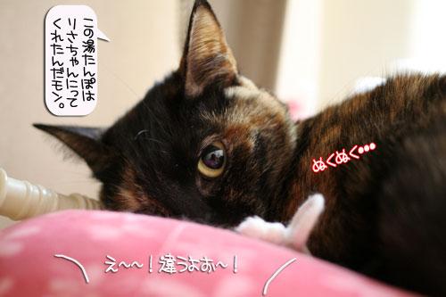 ネコ服と暖かい過し方_d0355333_16382208.jpg