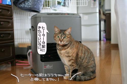 ネコ服と暖かい過し方_d0355333_16382329.jpg