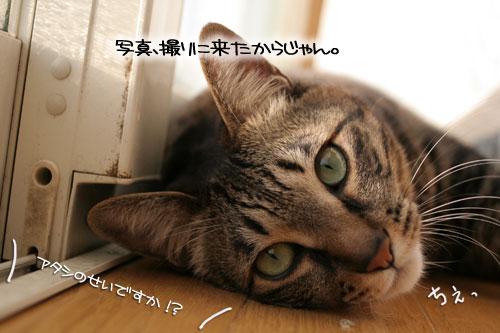 朝日は猫と相性がいい_d0355333_16384108.jpg