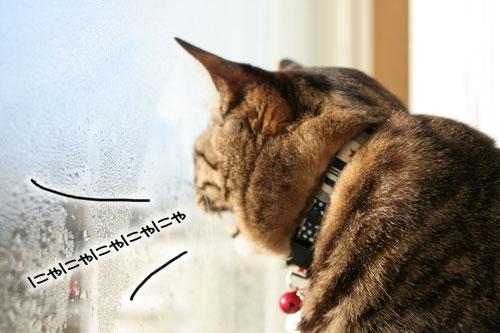 朝日は猫と相性がいい_d0355333_16384187.jpg