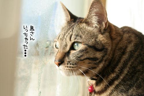 朝日は猫と相性がいい_d0355333_16384196.jpg