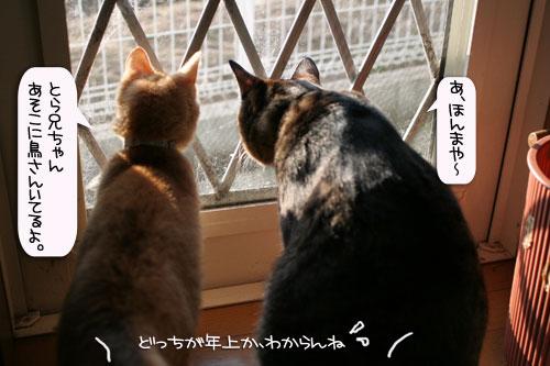 朝日は猫と相性がいい_d0355333_16384231.jpg