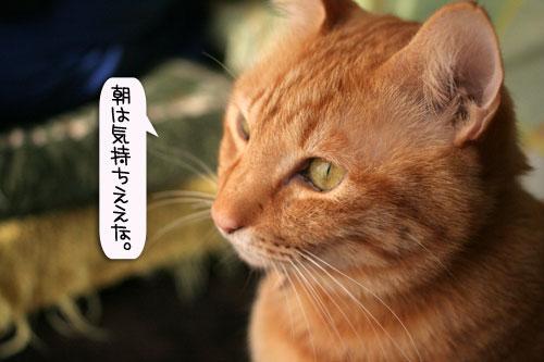 朝日は猫と相性がいい_d0355333_16384274.jpg
