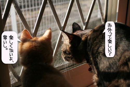 朝日は猫と相性がいい_d0355333_16384328.jpg