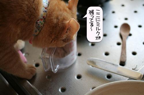 朝日は猫と相性がいい_d0355333_16384344.jpg