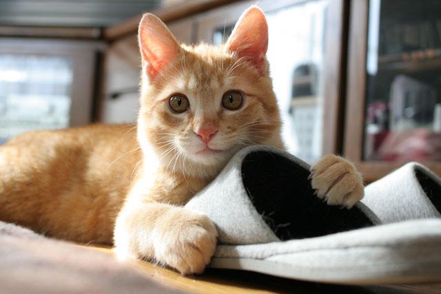 朝日は猫と相性がいい_d0355333_16384559.jpg
