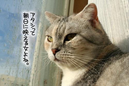 朝日は猫と相性がいい_d0355333_16384702.jpg