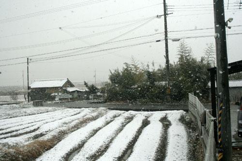 ハレの日に雪が降る_d0355333_16385264.jpg