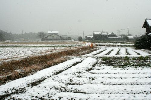 ハレの日に雪が降る_d0355333_16385382.jpg
