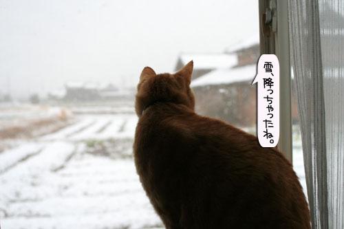 ハレの日に雪が降る_d0355333_16385388.jpg