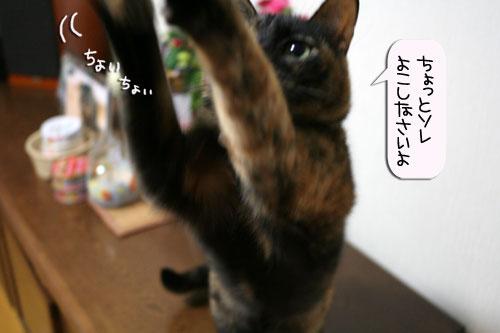 サビ猫撮影のヒミツ★動画つき_d0355333_16390701.jpg