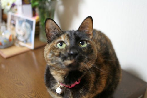 サビ猫撮影のヒミツ★動画つき_d0355333_16390702.jpg