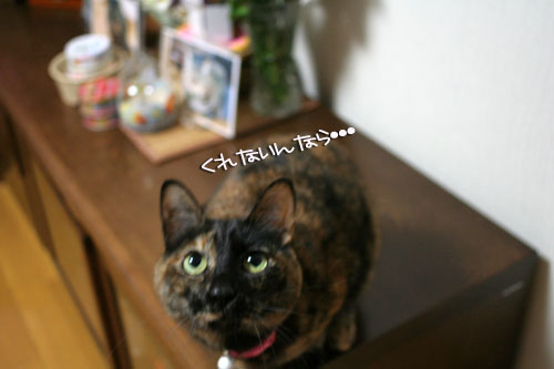 サビ猫撮影のヒミツ★動画つき_d0355333_16390712.jpg