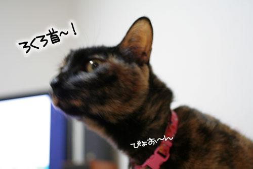 サビ猫撮影のヒミツ★動画つき_d0355333_16390860.jpg