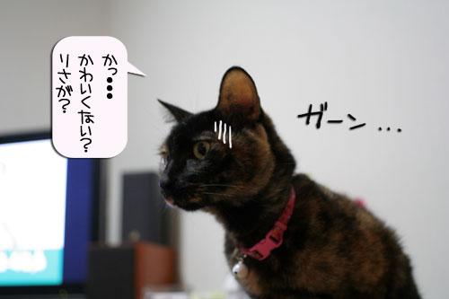 サビ猫撮影のヒミツ★動画つき_d0355333_16390915.jpg