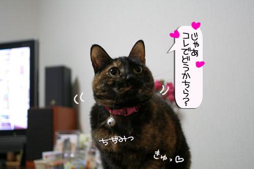 サビ猫撮影のヒミツ★動画つき_d0355333_16390935.jpg