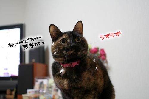 サビ猫撮影のヒミツ★動画つき_d0355333_16391004.jpg
