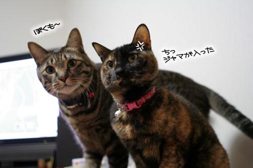 サビ猫撮影のヒミツ★動画つき_d0355333_16391052.jpg