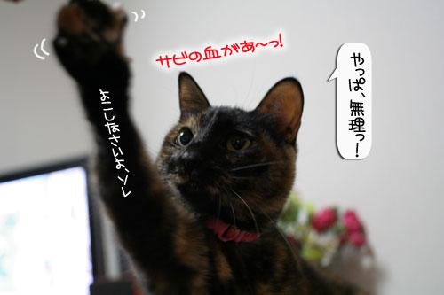 サビ猫撮影のヒミツ★動画つき_d0355333_16391086.jpg