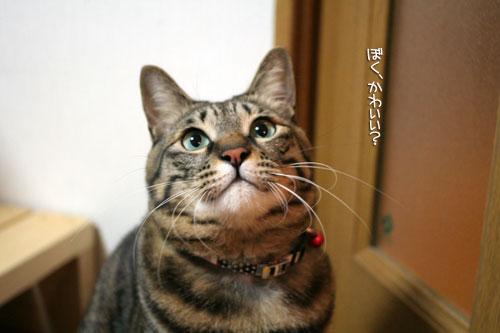サビ猫撮影のヒミツ★動画つき_d0355333_16391193.jpg