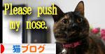 サビ猫撮影のヒミツ★動画つき_d0355333_16391293.jpg
