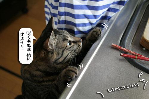 ネコと夫のおいしいギョーザのヒミツ_d0355333_16391335.jpg