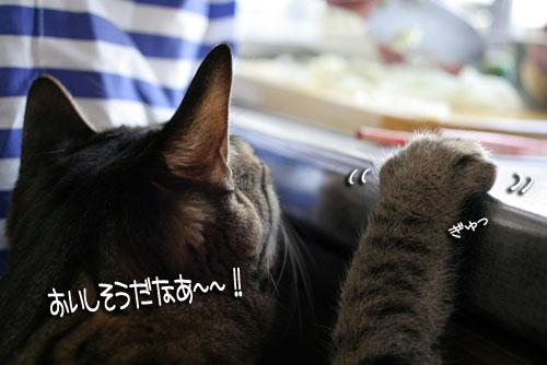 ネコと夫のおいしいギョーザのヒミツ_d0355333_16391479.jpg