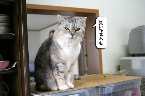 ネコと夫のおいしいギョーザのヒミツ_d0355333_16391539.jpg