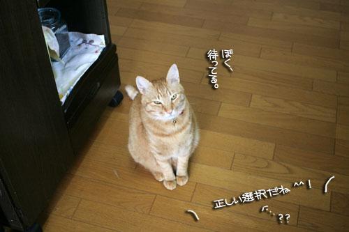 ネコと夫のおいしいギョーザのヒミツ_d0355333_16391592.jpg