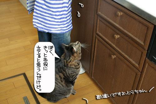 ネコと夫のおいしいギョーザのヒミツ_d0355333_16391676.jpg