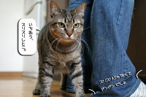 ネコと夫のおいしいギョーザのヒミツ_d0355333_16391722.jpg