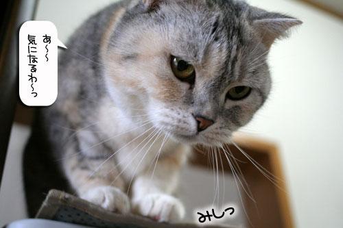 ネコと夫のおいしいギョーザのヒミツ_d0355333_16391730.jpg