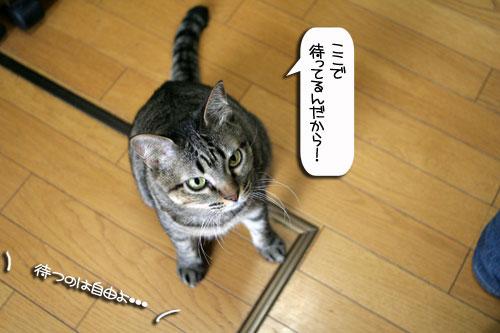 ネコと夫のおいしいギョーザのヒミツ_d0355333_16391792.jpg