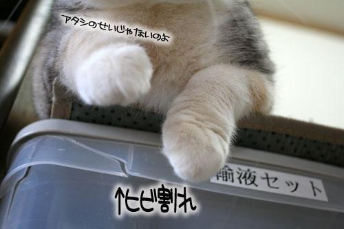 ネコと夫のおいしいギョーザのヒミツ_d0355333_16391803.jpg
