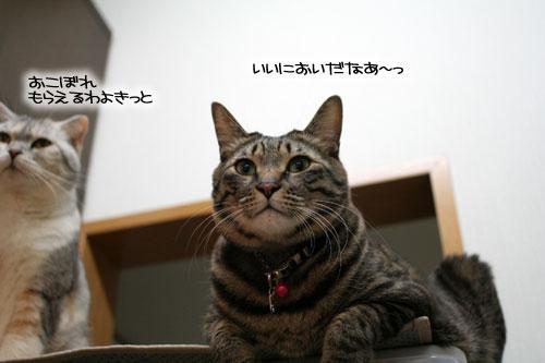 ネコと夫のおいしいギョーザのヒミツ_d0355333_16392082.jpg